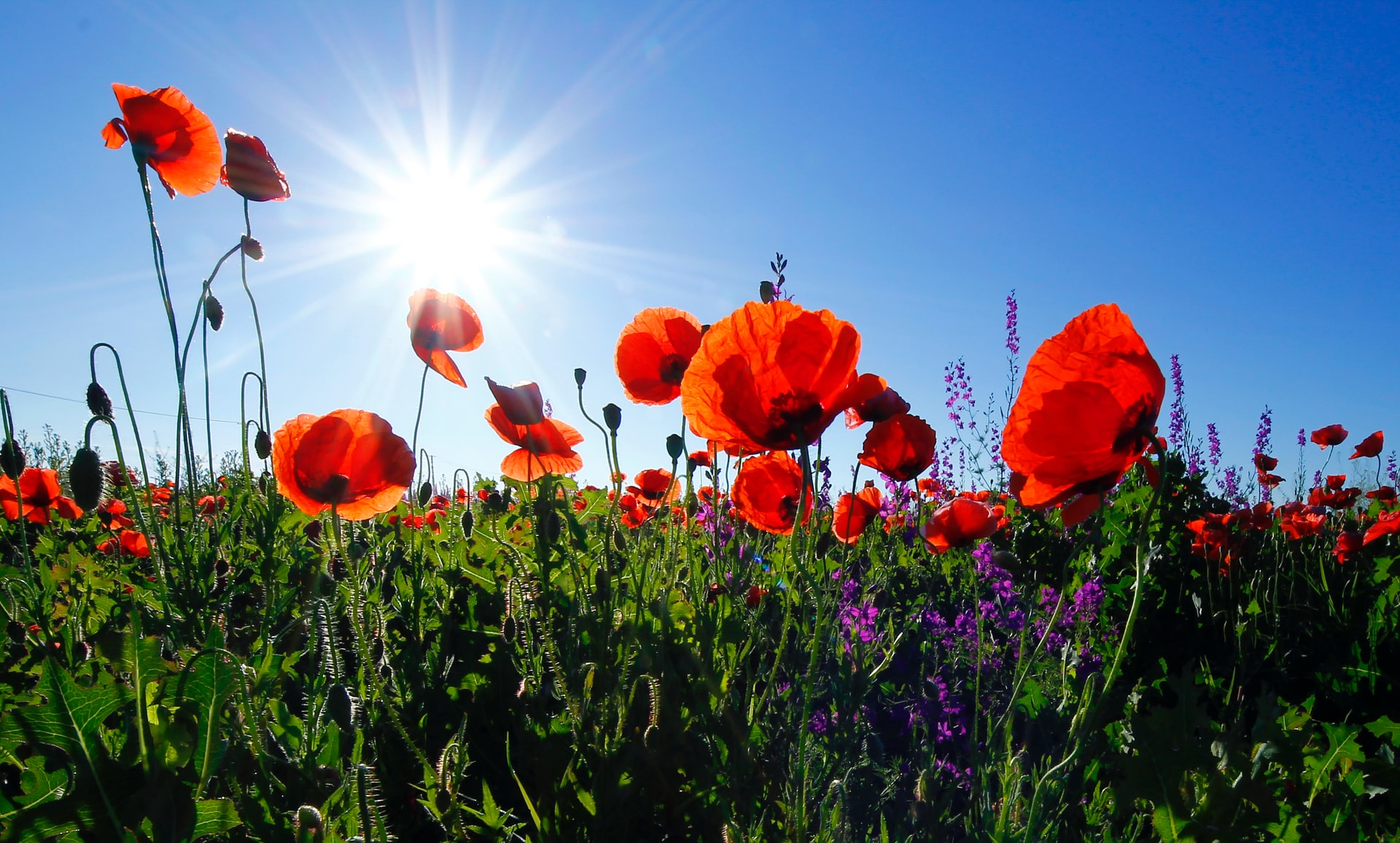 Remembrance Sunday 2020 Update